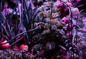 Сады, созданные знаменитыми художниками