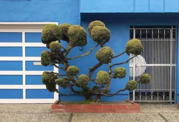 Странные деревья Сан-Франциско