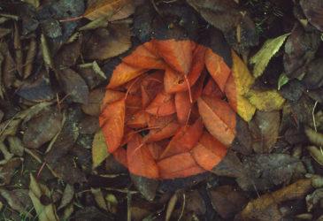 Геометрическая элегантность природы